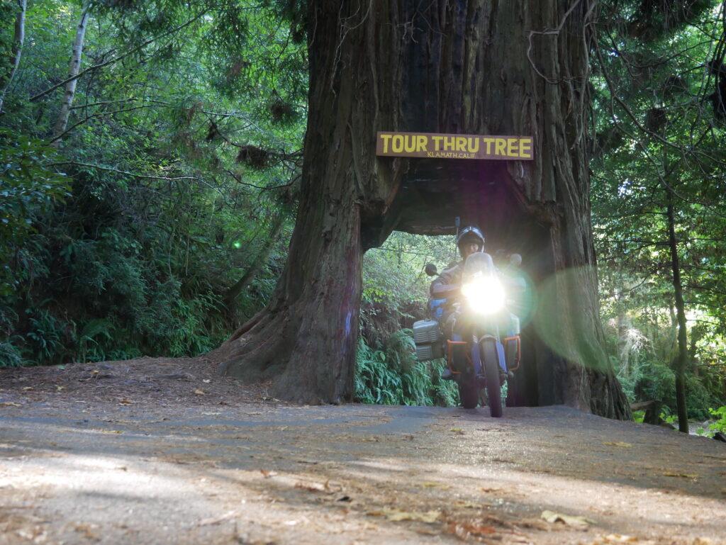 Baumdurchfahrt bei Klamath