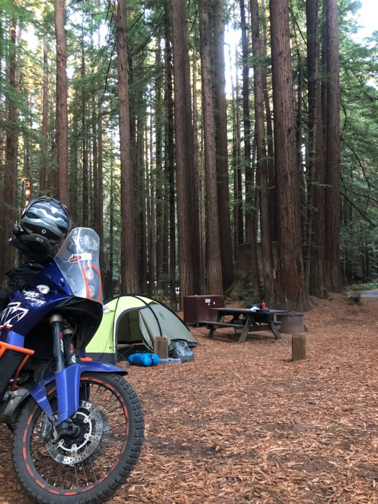Camping im Red Wood Forest