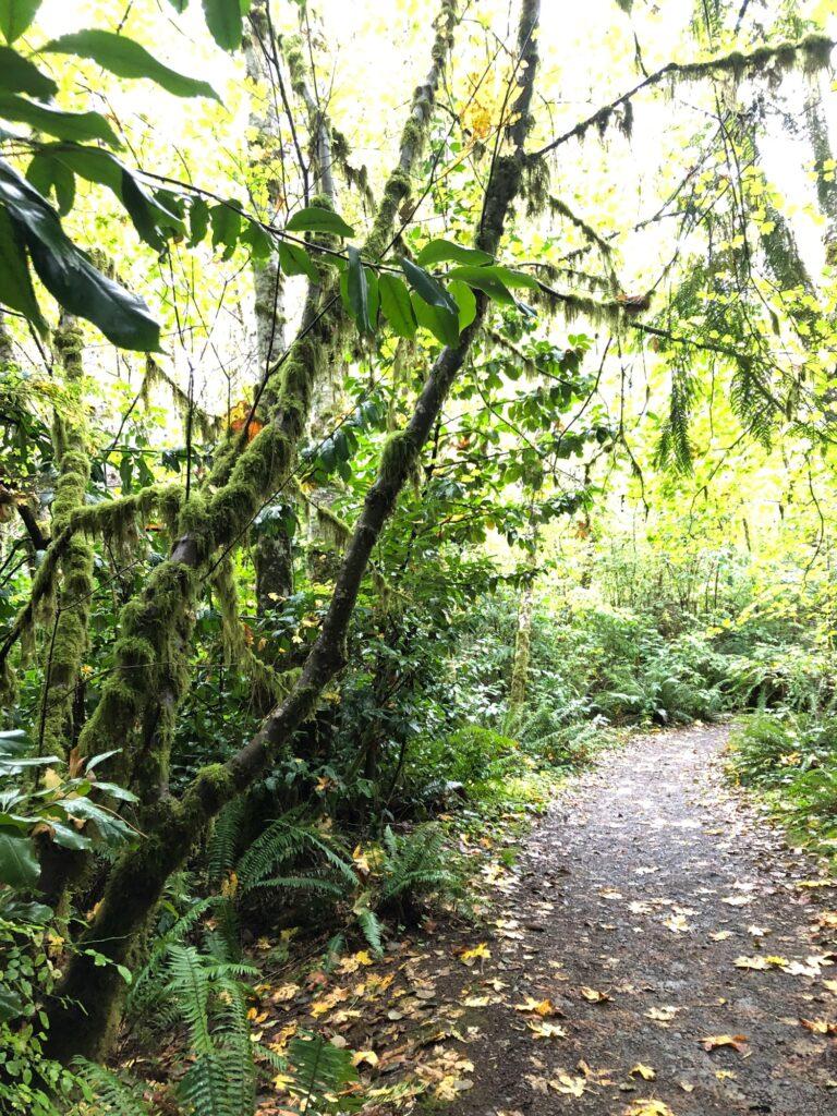 Spaziergang im Regenwald