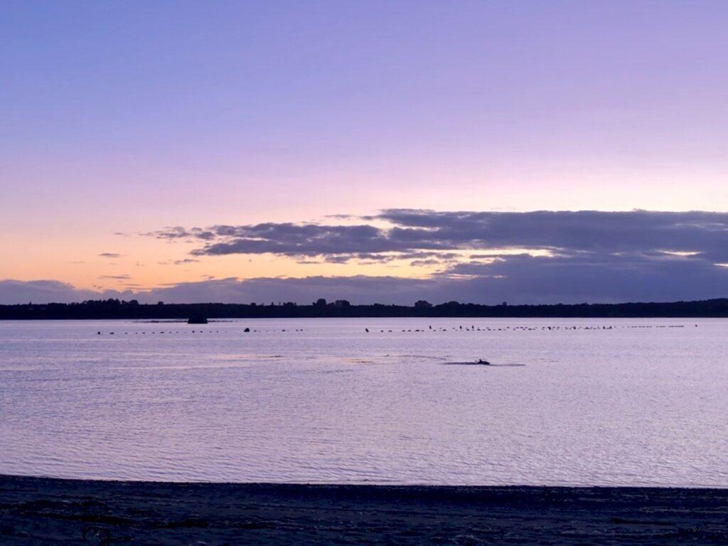 Delphine in der Bucht